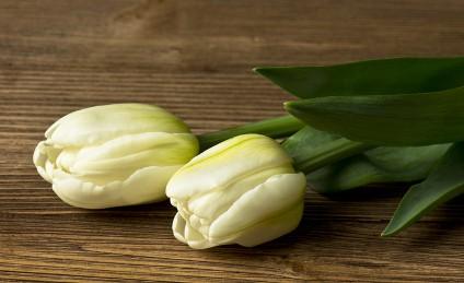 kwiaciarnia-rzeszow